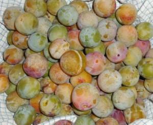 Prunes du jardin