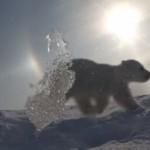 Premiers pas de l'ourson
