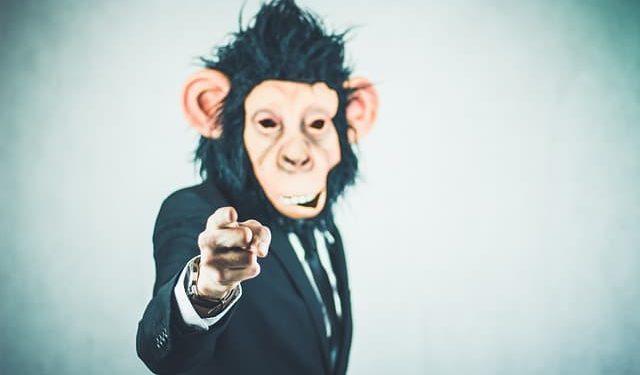 blague de singe sur les impôts